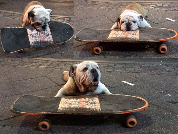 Hund_Skateboard