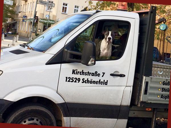 Hund_am_Steuer_re