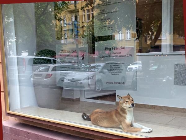 Hund im Schaufenster (Foto: Anne Schüchner)