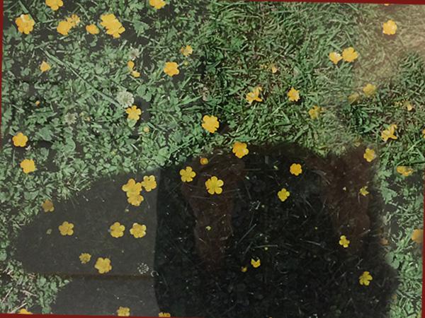 Farbaufnahme mit gelben Blumen(©Vivian Maier)