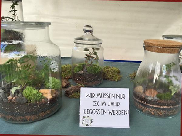 Stand mit Pflanzenterarrien (Foto: Anne Schüchner)